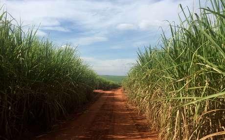 Campos de cana-de açúcar em Ribeirão Preto. REUTERS/Marcelo Teixeira