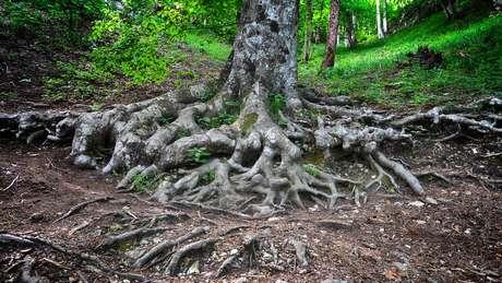 Se não houver redução nas emissões de carbono até 2100, pode haver uma redução de 10% dos fungos ectomicorrizas - e das árvores que dependem deles