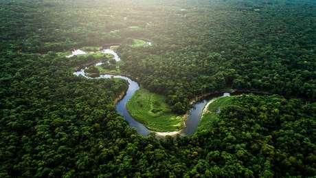 Pesquisadores mapearam o subterrâneo das florestas