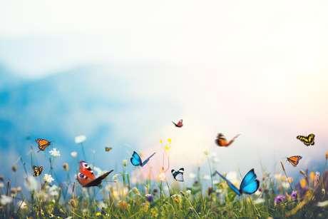 Amor de borboleta