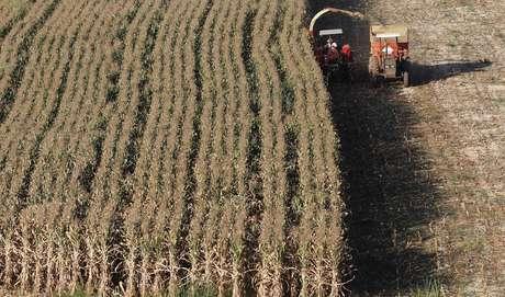 Colheita de milho em Santo Antônio do Jardim (SP)  06/02/2014 REUTERS/Paulo Whitaker