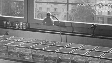 Os exames ficaram tão eficientes que por duas décadas dezenas de milhares de rãs foram inoculadas com urina humana