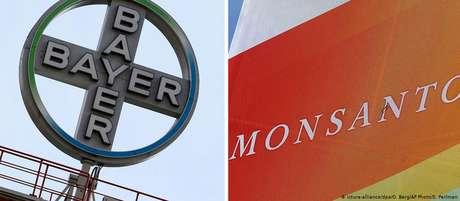 Bayer leva à frente planos de ampliação de fábrica de processamento de sementes da Monsanto no Chile