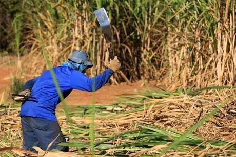 Trabalhador rural em colheita de cana em Rio das Pedras, região de Piracicaba, interior de São Paulo