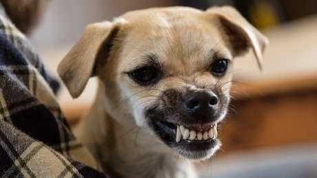 A personalidade do dono afeta as concentrações do hormônio cortisol no seu cachorro