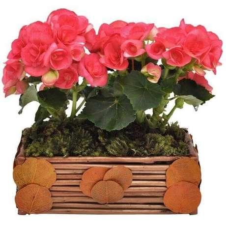 17- A begônia é um símbolo de jovialidade e fertilidade. Fonte: Pinterest