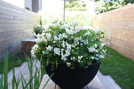 25- No inverno deixe o solo do vaso com begônia meio seco. Fonte: Limaonagua