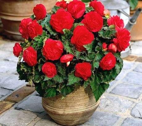 46- A begônia vermelha plantada em vaso pode decorar varandas e espaços gourmets com luz indireta. Fonte: Pinterest