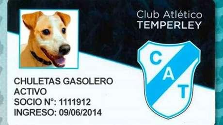 Cães e gatos podem ser sócios-torcedores de time argentino