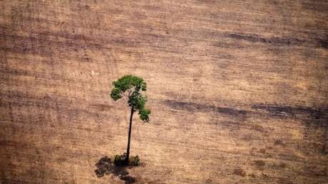O desmatamento na floresta Amazônica vem aumentando desde 2015, atingindo pico em 2018, segundo dados do Instituto Nacional de Pesquisas Espaciais (INPI). Ao que parece, 2019 terá resultados piores que os do ano passado
