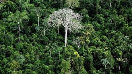 Ministros do meio-ambiente de gestões anteriores acusam o governo atual de desmantelar as políticas ambientais. Salles argumenta que governo Bolsonaro recebeu estruturas sucateadas