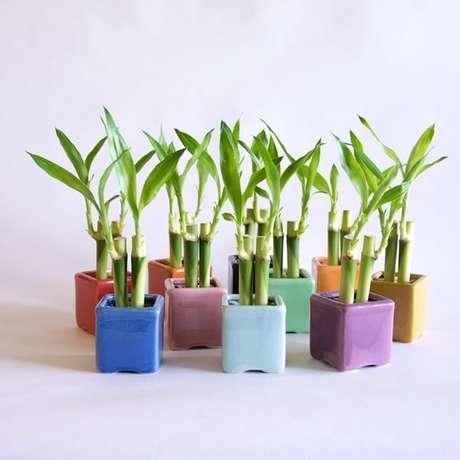 17. Arranjos formados e cultivados em vasos coloridos. Fonte: Studio Lab Decor