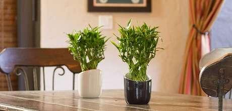 9.Essa plantacomplementa a decoração da sala de jantar. Fonte: Transforme Sua Casa