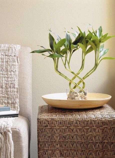 10.Essa planta complementa a decoração do ambiente. Fonte: Pinterest