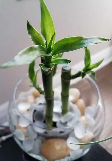 20. Cultive essa planta em recipientes com água. Fonte: Pinterest