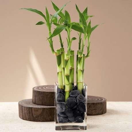 11.Esse vegetal pode sercultivado em água. Fonte: Pitnerest