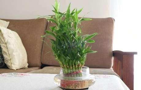 7. Bambu da sorte decora o ambiente da sala de estar. Fonte: Pinterest