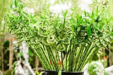 21. Decore o ambiente com essa planta retorcida nas pontas. Fonte: Pinterest
