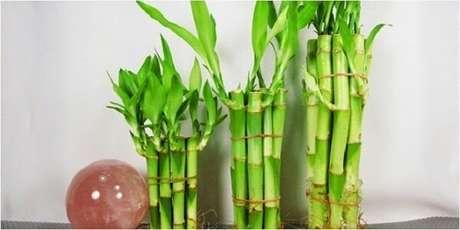 23. Hastes desse vegetal unidos formando um arranjo. Fonte: Pinterest