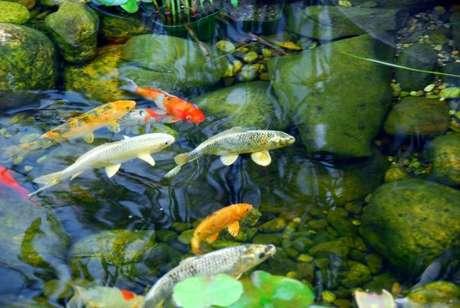 15. Cuide bem dos peixes do seu lago artificial – Por: Blog da Cubos Lagos