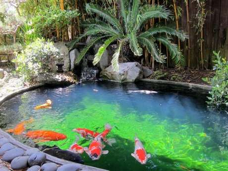 45. Peixes no lago artificial – Por: Pinterest