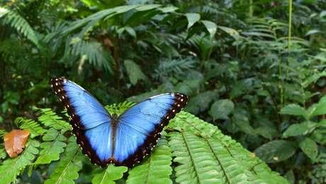 Os pesquisadores encontraram 246 espécies de borboletas e mariposas