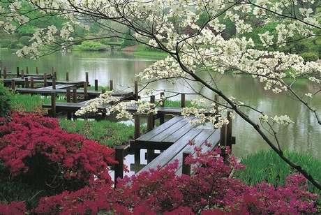 8. Plantas jardim japonês e caminho estruturado com placas de madeira. Fonte: Dicas de Argentina