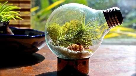 1. Terrário na lâmpada encanta a decoração da casa. Fonte Pinterest