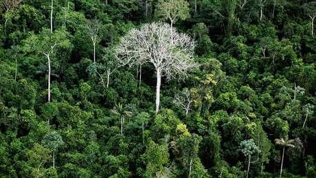 Floresta Amazônica, em foto de arquivo; Alemanha é a segunda maior contribuinte global para fundo de preservação desse bioma