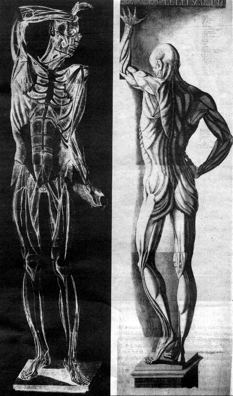 Anatomias (Cattani e Mascagni)