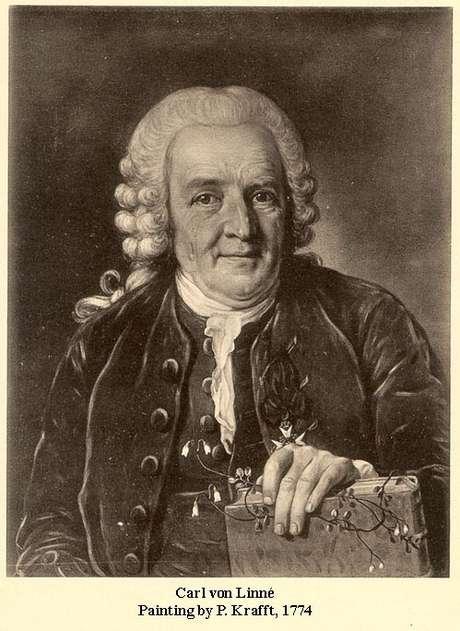 Carl von Linné (Lineu)