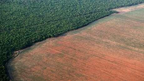 O desmatamento na Amazônia aumentou, em junho, quase 60% em relação ao mesmo mês em 2018. Com isso, a floresta perdeu 762,3 km² de mata nativa no mês passado, o que corresponde a duas vezes a área de Belo Horizonte