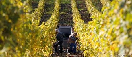 Agricultores franceses temem invasão de produtos sul-americanos e diferença nos padrões de qualidade