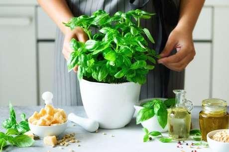Descubra como plantar de manjericão a salsinha