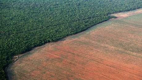 O Fundo Amazônia recebe recursos de diversos países para combater o desmatamento