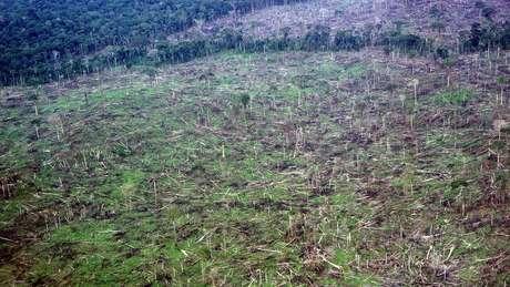 No caso das florestas tropicais, como a Amazônia, que têm de 90% a 100% de cobertura de árvores, as alterações climáticas têm trazido efeitos devastadores