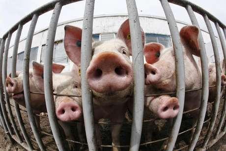 Criação de porcos em Belotincy, Bulgária  28/04/2009 REUTERS/Oleg Popov
