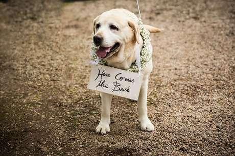 5. Cachorro segurando a plaquinhas para entrada de casamento anunciando a entrada da noiva. Foto Iko Eventos