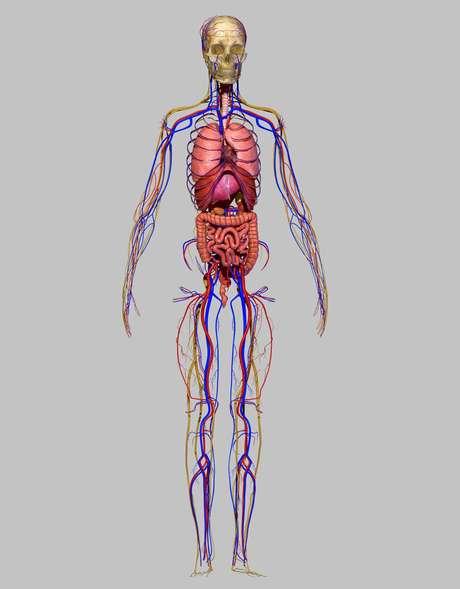 O sistema nervoso simpático provoca mudanças em nosso corpo semelhantes àquelas que sentimos quando estamos apaixonados