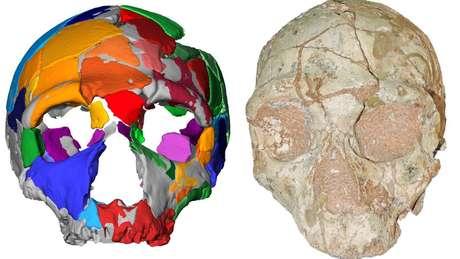 Apidima 2 parece ser de um neandertal e é um crânio mais novo que o moderno crânio humano encontrado junto