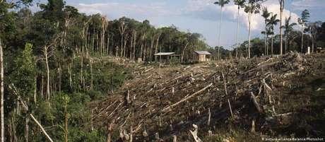 Área de floresta primária alvo de exploração ilegal de madeira na Amazônia