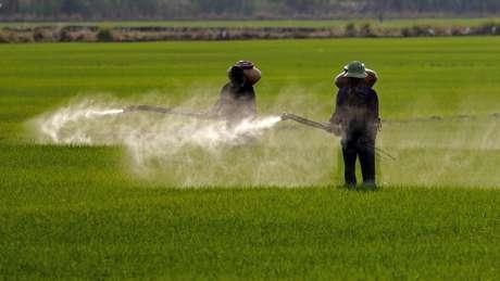 Agrotóxicos afetam polinizadores e podem prejudicar lavouras vizinhas que não são resistentes a eles