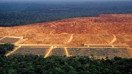 A destruição da vegetação nativa e as mudanças climáticas vão prejudicar diretamente o agronegócio no Brasil.