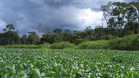 Ao longo de mais de uma década de existência, a Moratória da Soja mostrou na prática que é possível reduzir o desmatamento