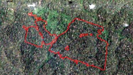 Esta imagem de satélite mostra um dos trechos de floresta que recebeu um alerta do Imazon. Está identificado no mapa acima com o ponto verde, e mostra a situação da floresta no dia 8 de outubro de 2018