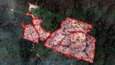 O mesmo trecho de floresta (ponto verde no mapa), mas em 24 de fevereiro de 2019. Neste caso, a floresta foi destruída completamente