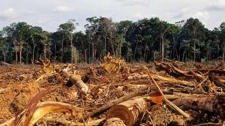 Cerca de 20% da floresta amazônica já foi destruída, segundo especialistas