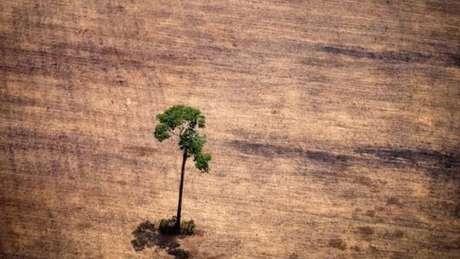 'Monitoramento do Brasil é reconhecido mundialmente', diz pesquisador do Imazon