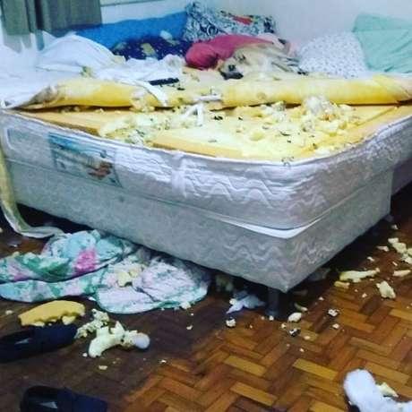 Chico, vira-lata de 8 meses, viraliza nas redes sociais após destruir quarto da dona