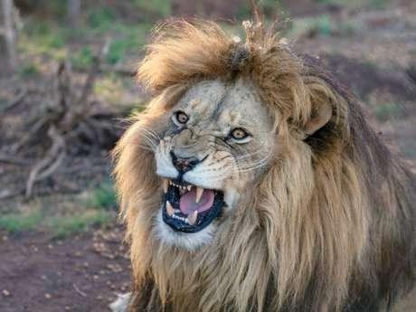 As 20 características mais marcantes de Leão